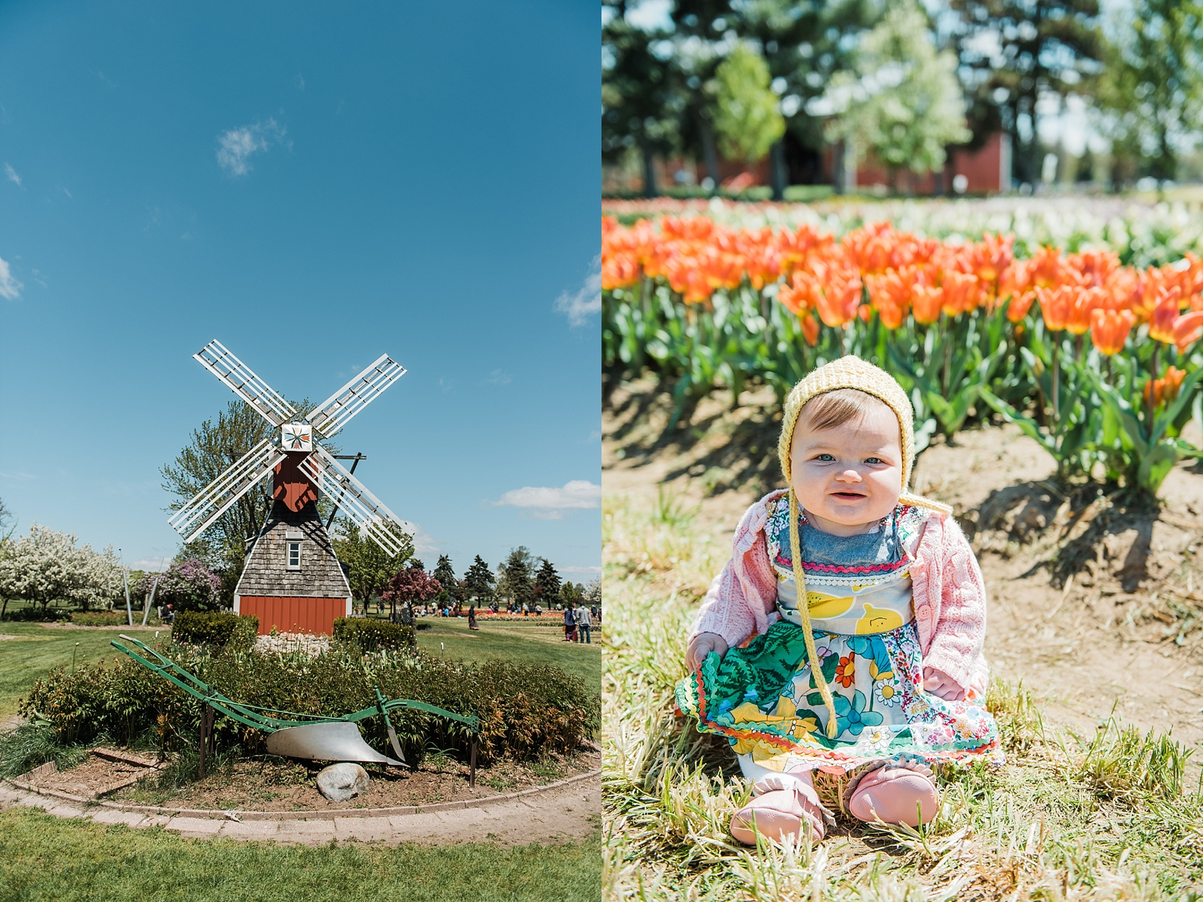 Tulip Farm, Holland Michigan_1871