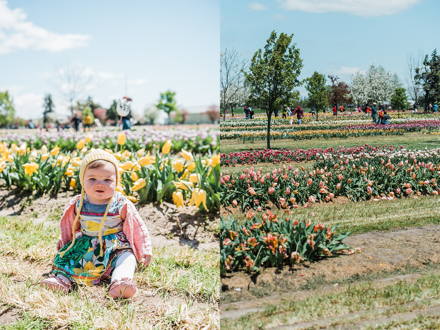 Tulip Farm, Holland Michigan_1874