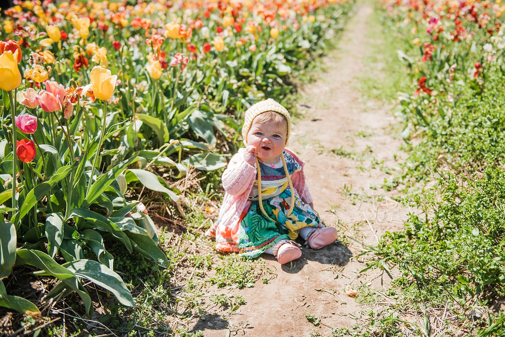 Tulip Farm, Holland Michigan_1894